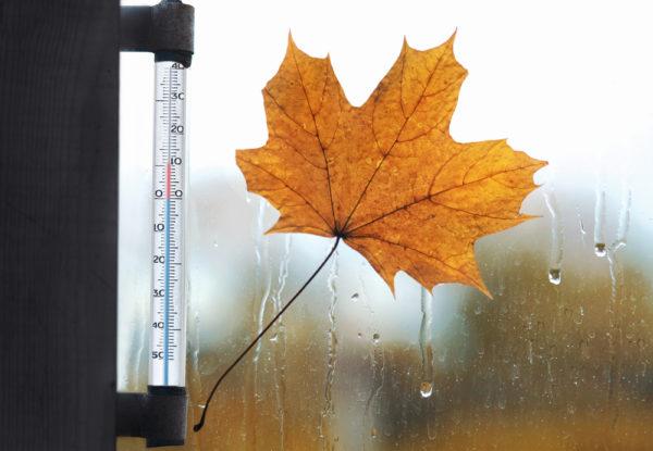 Leaf Thermostat