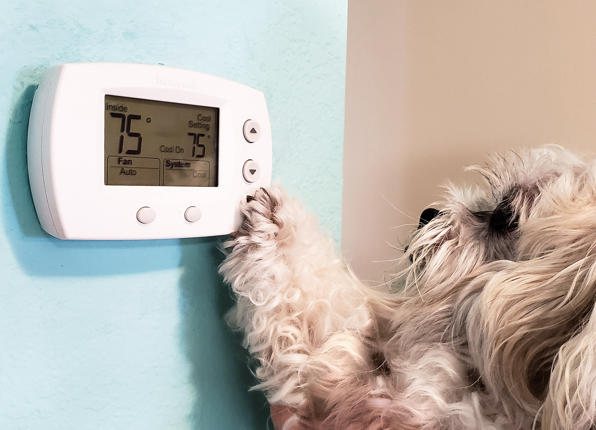 Dog Adjusting Thermostat